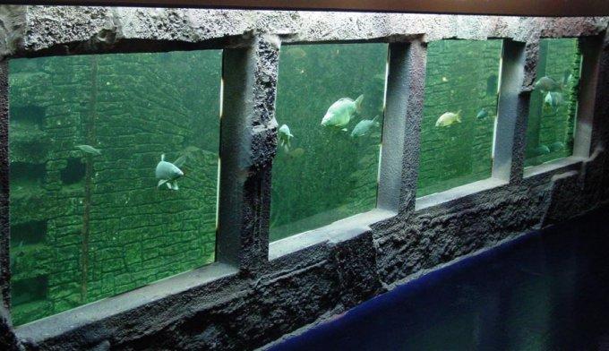 aquarium eau douce visite